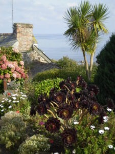 Gardens in Mousehole walking with lets go walking