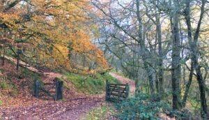 Exmoor Walking holidays with letsgowalking